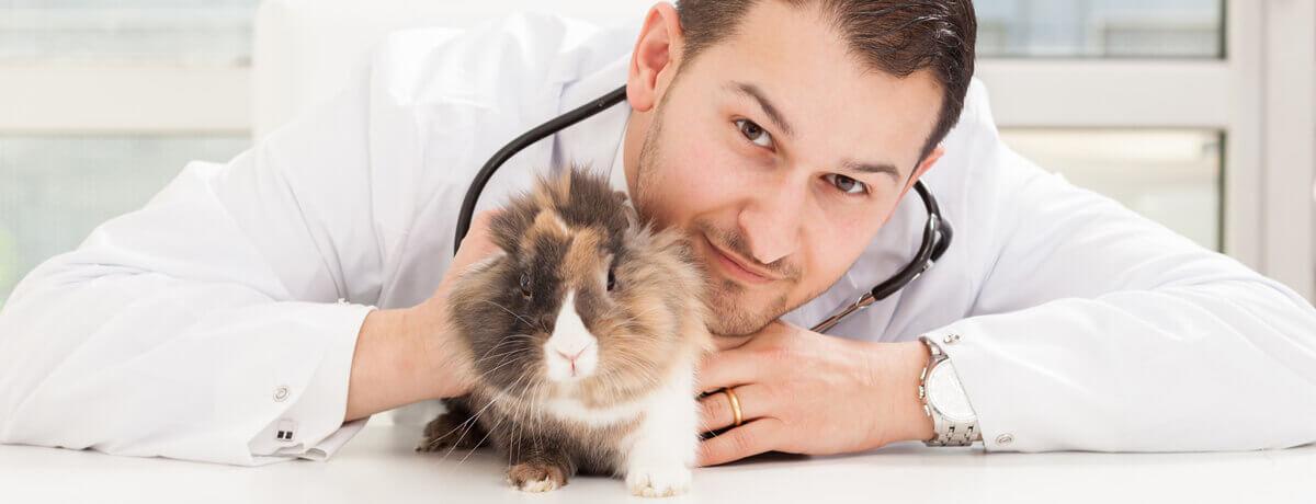 centro veterinario rogocan