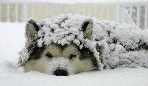 perro en invierno