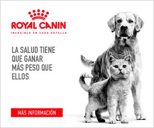Rogocan Productos Veterinarios Royal Canin